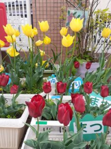 お花たちも春いっぱいでみんなを待っています!